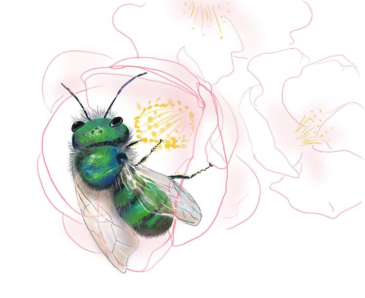 Mason-bee.legacy750